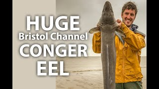 HUGE Bristol Channel Shore-Caught Conger Eel