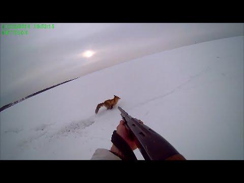 Охота на Лиса