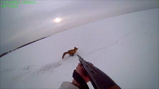 Охота на Лиса Fox Hunt
