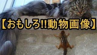 動物の個性炸裂!!!! かわいくて一生懸命な動物たちに癒されてください♪ ...