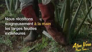 #2 Aloe Vera Pour Tous | Savoir faire Forever Living | L'umiere sur l'aloe vera Barbadensis Miller
