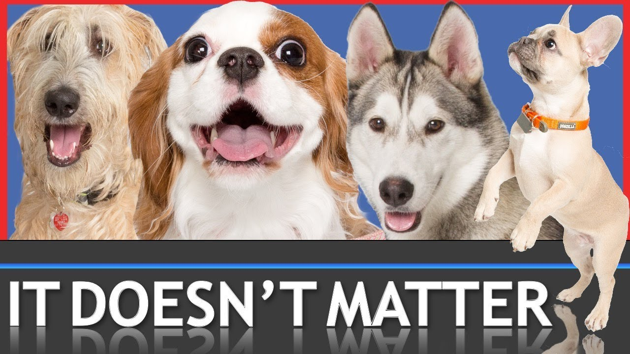 Breed Doesn T Matter But