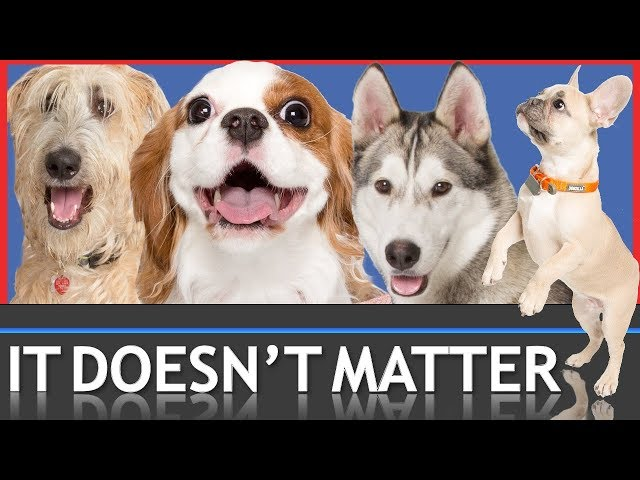 Why Your Dog's Breed Doesn't Matter. But THIS DOES!