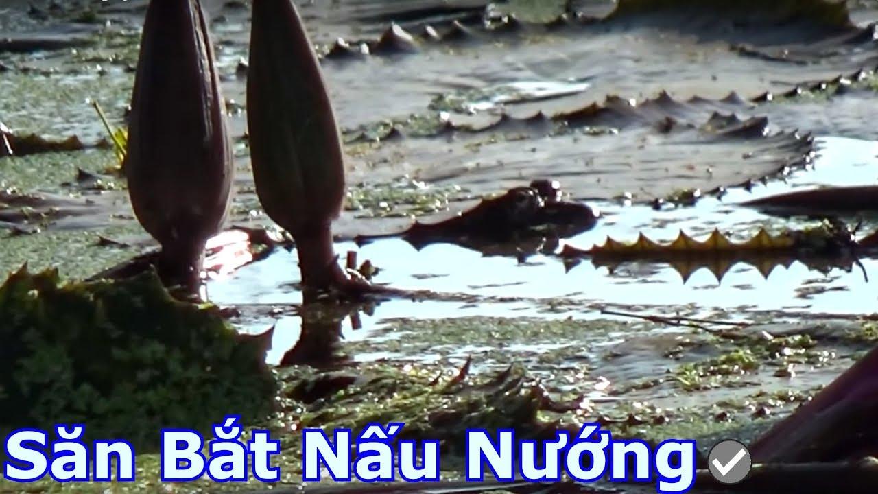 Câu ếch gãy cần 2 lần vì dính ếch bự