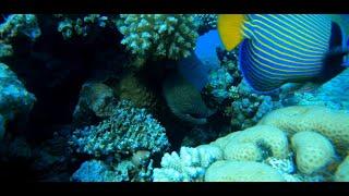 Египет Ras Mohammed и Siva Sharm рифы сентябрь 2020г в 4К