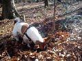 JRT digging