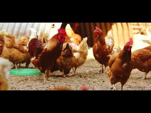 Organic Farmers Market, Kenya -  Jane Randall