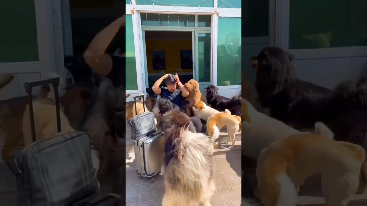 World best dog trainer video footage ❤️👏
