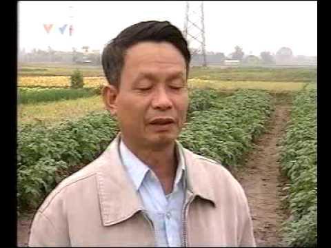 Phóng sự VTV thực hiện tại Thái Bình