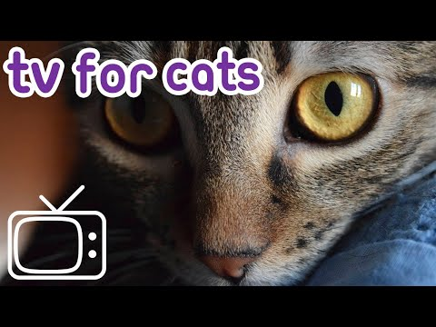 Cat TV: Calm My Cat! Soothing Fish TV and Music!
