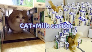 When I gave a cat a tunnel of milk carton, it stopped coming out.