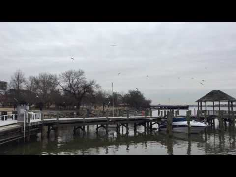 Happy flying birds at Water Front Old Town, Washington D.C