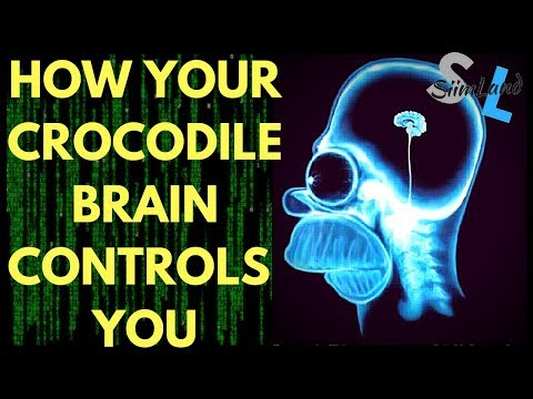 How Your Reptilian Brain Controls Your Behaviour aka Crocodile Brain