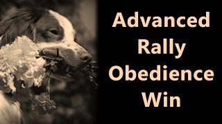 Chief In Advanced Rally Obedience