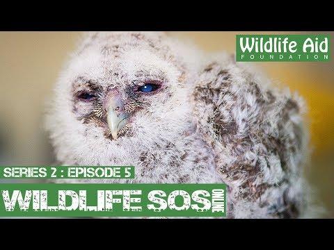 Cute baby owl rescued!: Wildlife SOS Online S2  Episode 5