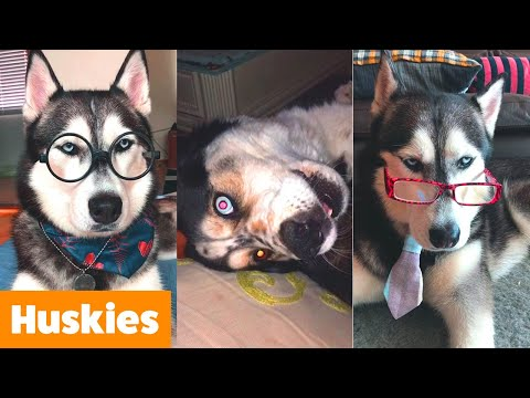 Silly Cute Husky Bloopers | Funny Pet Videos