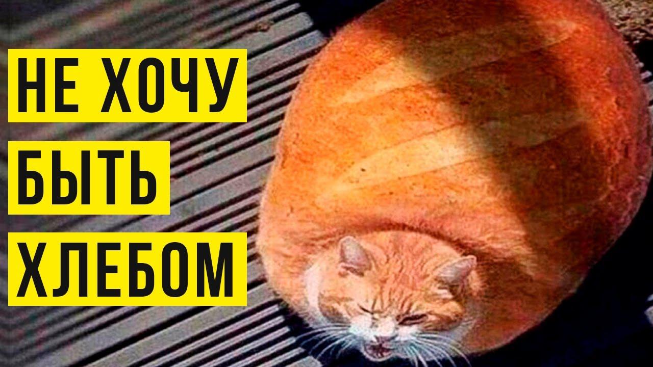 Кот не хочет быть хлебом! Приколы | Мемозг #409