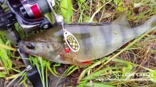 Ловим хищника на вертушки, рыбалка на спиннинг