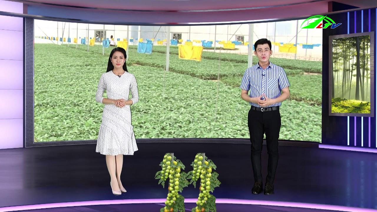 Trồng Bắp Nữ Hoàng Đỏ Thu Hàng Trăm Triệu   365 Ngày Chuyển Động   Lâm Đồng TV