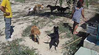 Dog Group 5