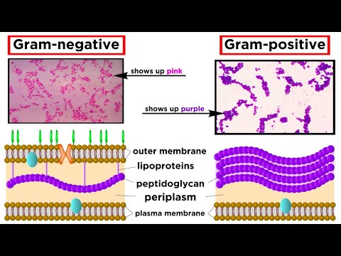 Unicellular Life Part 1: Bacteria