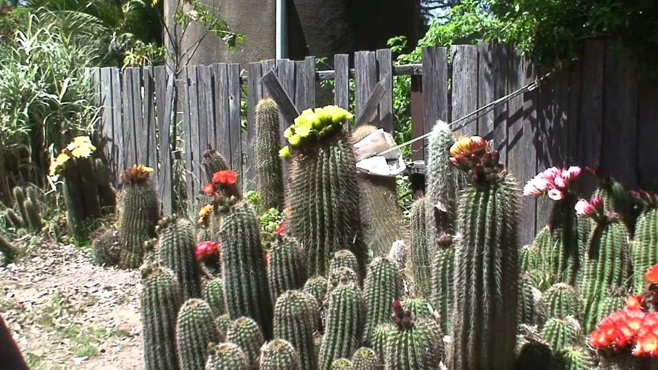 Wonderful Joyleneu0027s Cactus Garden   YouTube