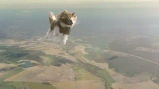 Коты на парашютах. Супер коты на супер парашютах!!!