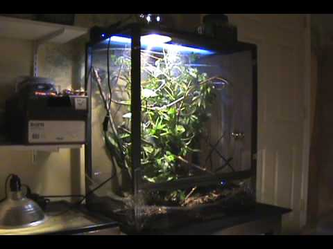 DmaProductions Veiled Chameleon Care  YouTube