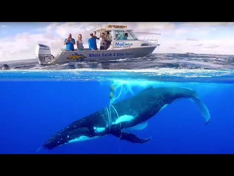 Вопрос: Как помочь спасти китов?