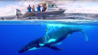 Как плачет кит когда попадает в сети. Огромный кит и его звук шокировал людей, его спасли в океане