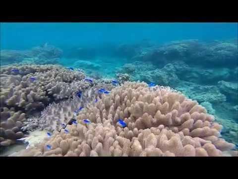 ASMR Scuba Diving  / Uncut- 21Minutes- Natural sound