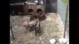 Зоогостиница для домашних животных «Лесси», 2008г.