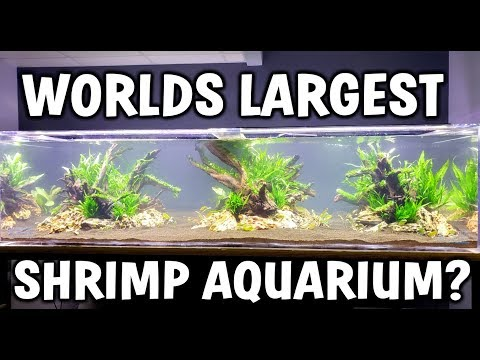 Worlds LARGEST Shrimp Aquarium! - Aquascape and Setup
