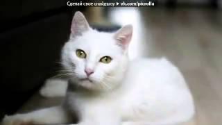 С моей стены под музыку Кошки и коты   мяуканье под музыку  Picrolla