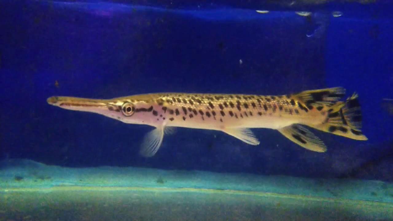 isuru aquarium