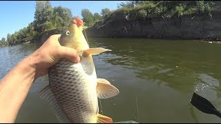 САЗАН утащил Спиннинг!!!ВОТ это рыбалочка!!!Ловля Сазана с берега!Ахтуба,сентябрь 2018!!!