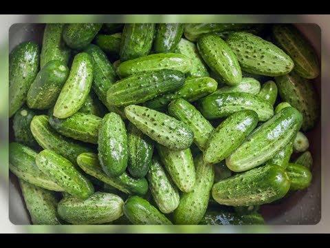 Огурцы!! Мой любимый гибрид, для открытого грунта!! | огородника | урожайный | открытого | родничок | огурцы | огурца | огурец | огурей | грунта | гибрид