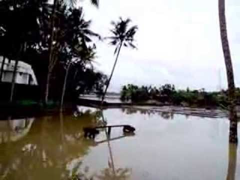 flood in kerala, aluva