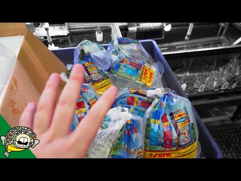 Fish Store Unboxing - 4 Boxes Of Fish!