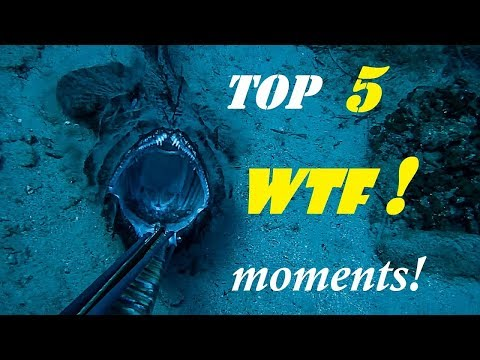 Spearfishing | TOP 5 WTF moments CAUGHT on VIDEO ✅
