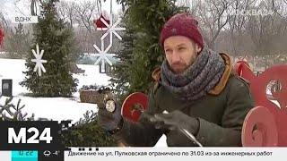Сильный ветер ожидается в Москве 6 февраля   Москва 24
