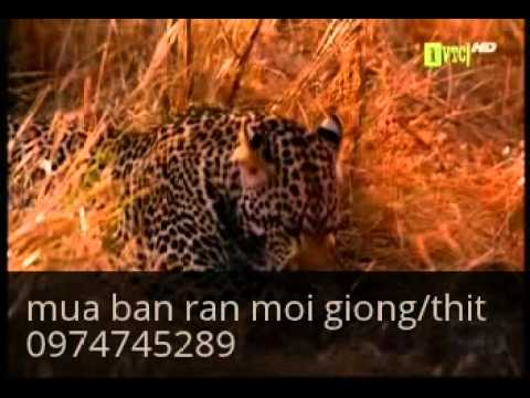 Video the gioi dong dat hoang gia clip video