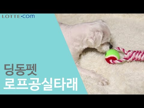 [사전보고] 딩동펫 - 강아지 장난감 로프공실타래 리뷰