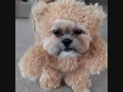 Ewok Dog Youtube