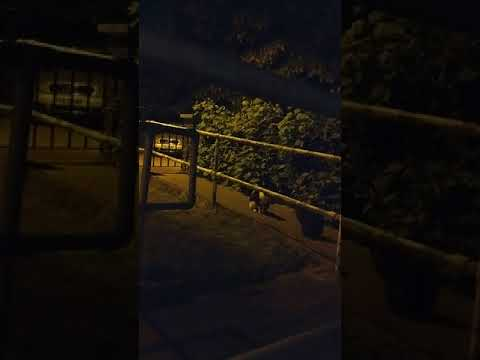Male Cats Fight In The Middle Of The Night