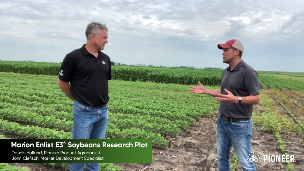 Pioneer Brand® Enlist E3® Soybeans: Marion Research Plot Visit