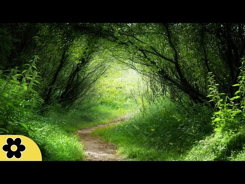 Healing Meditation Music, Relaxing Music, Music for Stress Relief, Background Music, �C