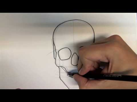 How to draw a skull step by step - Things to Draw