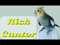 Cantoria do Nick muito FELIZ | Calopsita