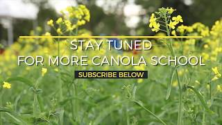 Canola School: New tool helps optimize combine settings